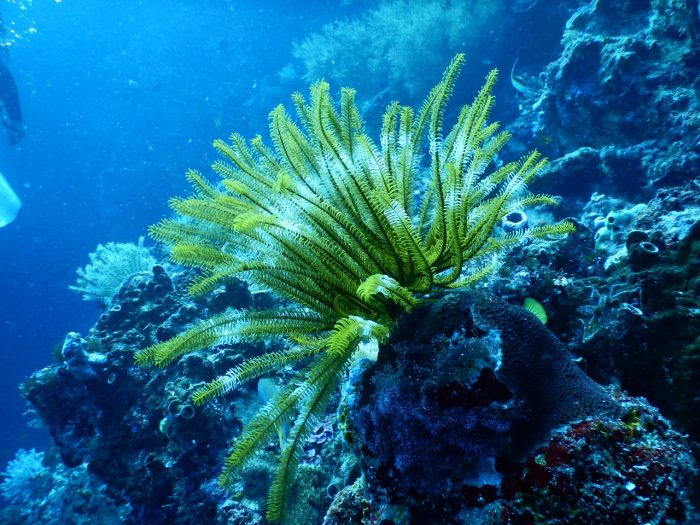 Image of marine life - Jean-Francois de Clermont-Tonnerre